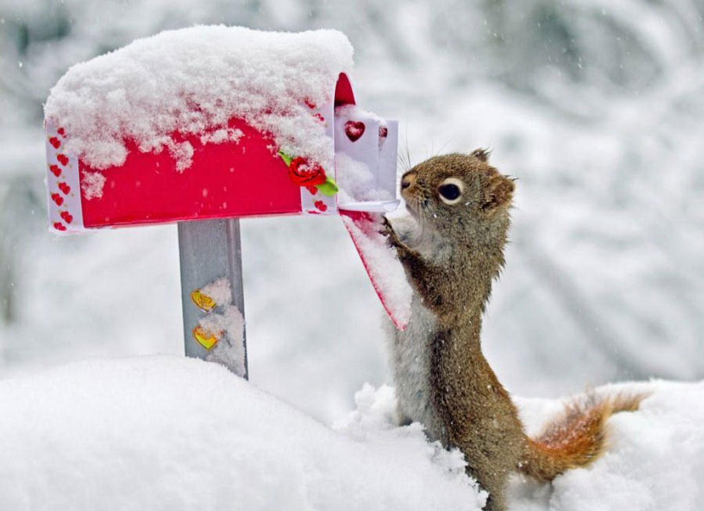 Love Letter Chipmunk Squirrel